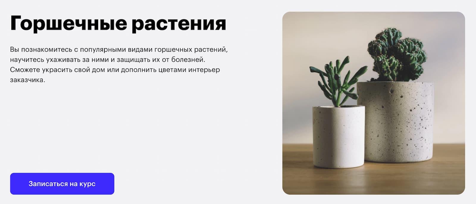 Записаться на курс «Горшочные растения» от Skillbox